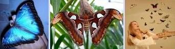 Получить в подарок живую бабочку-это интересно.
