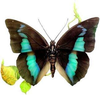 Живая бабочка Demok.
