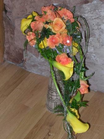 Сайт комнатные вьющиеся цветы